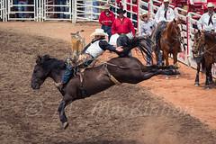 Calgary Stampede 2016 (tallhuskymike) Tags: calgary stampede event calgarystampede cowboy horse 2016 rodeo outdoors greatestoutdoorshow prorodeo action alberta horses