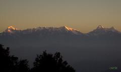 Sunrise on Snow Caped Himalaya (Banerjee-India) Tags: himalaya kumaunrange sunrise trishul peak nandadevipeak maiktolirange nature naturephotography photography northernindia snow mountains snowcapedmountains