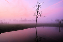 59040001 (felipe bosolito) Tags: tree pond reflection morning dawn sunrise pink blue fog fuji xt20 xf14f28 velvia