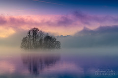 A9908586_s (AndiP66) Tags: gamma insel island sursee luzern lucern blauestunde bluehour nebel dunst fog mist sonnenaufgang sunrise sonne sun morgen morning sony alpha sonyalpha 99markii 99ii 99m2 a99ii ilca99m2 slta99ii tamron tamronspaf70200mmf28dildif tamron70200mm 70200mm f28 amount andreaspeters