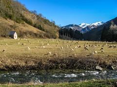 Tourte (Ustou/Ariège) (PierreG_09) Tags: ariège pyrénées pirineos couserans montagne occitanie midipyrénées hiver grange étable brebis mouton troupeau tourte ustou rivière coursdeau torrent alet
