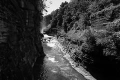 Monochrome River (Northern Wolf Photography) Tags: 14mm canyon em5 letchworth monochrome olympus river rocks statepark trees hunt newyork unitedstatesofamerica us