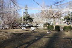 Aviary @ Volière de l'Impérial @ Annecy (*_*) Tags: 2019 winter hiver february sunny europe france hautesavoie 74 savoie annecy animal bird