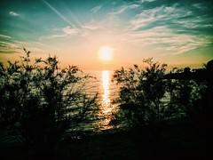 (Suite116) Tags: croazia croatia istria sun sunset tramonto sole green greeny sky tree trees water summer estate alberi arbusti vsco porat istarska vacanze sunrise relax