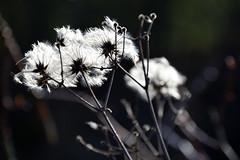 Le retour des beaux jours (Croc'odile67) Tags: nikon d3300 sigma contemporary nature fleurs flowers printemps spring