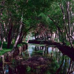 Cool shade in a hot summer day (lebre.jaime) Tags: portugal beira serradaestrela estrelahighland estrelamountainrange creek tree foliage reflex hasselblad 503cx sonnar cf40150 film120 6x6 mf mediumformat kodak portra160120 epson v600 affinity affinityphoto