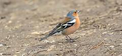 J78A0144 (M0JRA) Tags: birds humber ponds lakes people trees fields walks farms traylers