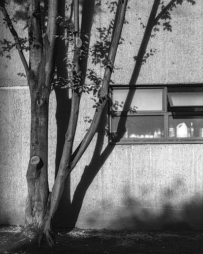 Concrete & Tree