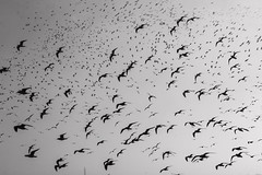 Migratory Birds (geeta_maurya) Tags: bw blackandwhite migretorybirds birds geometryform dailylife naturallight texture forms places morningshot dramatic monochrome people shapes fineart fineartphotography art artistic travel incredibleindia beauty geetamaurya delhi india