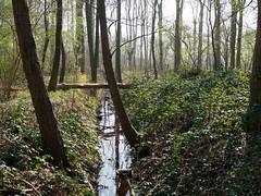 Landgoed Nienoord (Jeroen Hillenga) Tags: nienoord leek bos forest groningen netherlands landscape landschap nederland natuur nature natuurgebied natur landgoed