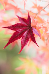 Bewitched (johnshlau) Tags: bewitched tenjuangarden nanzenjitemple 南禪寺 天授庵 zen autumncolors autumn colors redleaf red leaf leaves kyoto japan garden temple buddhist