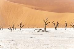 _RJS4643 (rjsnyc2) Tags: 2019 africa d850 desert dunes landscape namibia nikon outdoors photography remoteyear richardsilver richardsilverphoto safari sand sanddune travel travelphotographer animal camping nature tent trees wildlife