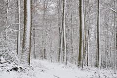 Et lorsque la neige a la bonne idée de saupoudrer de nacre les sous-bois (Excalibur67) Tags: nikon d750 sigma globalvision arbres 24105f4dgoshsma forest foréts arbre trees nature neige snow vosgesdunord