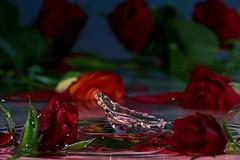 🌹ROSE IS A ROSE 🌹 (CHWVB) Tags: roseisarose smileonsaturday wassertropfen splash waterdrop wasser water tropfenfotografie macro highspeed drop tropfen rot rose red hochgeschwindigkeit