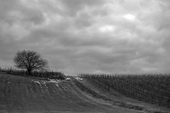 Winter (Dellatanus) Tags: italy landscape abstract blackandwhite black white trees oltrepopavese oltrepòpavese trip cloudscape clouds vineyard wine vinery