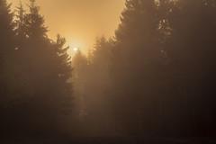 forest series #248 (Stefan A. Schmidt) Tags: warstein nordrheinwestfalen deutschland de forest tree trees fog mist misty sun sunlight backlight germany
