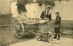 X990017 arbeitshund belgien (stadt + land) Tags: hunde hund bilder fotos arbeitshund historisch früher aufgabe transport alte fotografien
