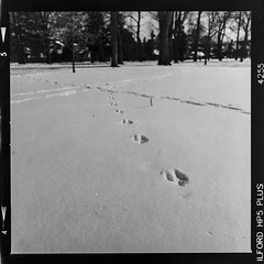 Rabbit tracks in the snow (Micah Bowerbank Photography) Tags: hamilton ontario canada ca