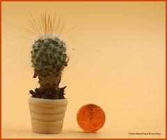 Kaktus Holztopf aus Zebrano gedrechselt. 19mm hoch- -    Cactus wooden pot made of zebrano turned. 19mm high (manfredkirschey) Tags: bonsai drechseln natur holz zebrano kaktus palme mini klein