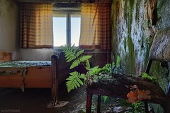 . homegrown (. ruinenstaat) Tags: tumraneedi ruinenstaat lost urbex lostplaces urbanexploring decay fern weed farn unkraut pflanze plant chair stuhl stol abandoned derelict neglected oblivion hotel 2018