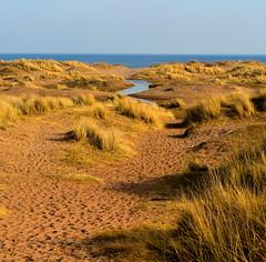 Beach (gcobb84) Tags: sand grass water beach