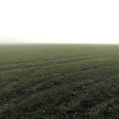 vanishing in the fog (vertblu) Tags: fog foggy fogandmist heavyfog densefog mist misty meadow autumnmeadow bsquare 500x500 vastness vast tracks crossinglines minimallandscape kwadrat minimal minimalism minimalismus green darkgreen monochrome vertblu white greenwhite moody mood ambiance grass grasses hidden traces calm calmness quiet quietness
