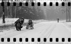Bronica SQ-A-060-005 (michal kusz) Tags: bronicasqa zenzanon 110 135 35mm 120to135 frame film bw blackandwhite landscape forest format monochrome medium monochromatic trees snow poland