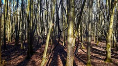 Long shadows - Lange Schatten (b_kohnert) Tags: schatten shadow baum trees wald forest landscape landschaft nature natur