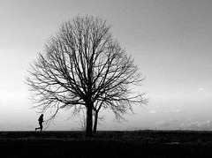 Step race (Fan.D & Dav.C Photgraphy) Tags: dawn sunrise copse dramatic sky moody backlit michelstadt sun sunset silhouette running jogging black white tree man alone nature light run trees