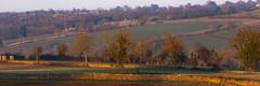 Kites In The Cotswolds (Geraldine Curtis) Tags: cotswolds rural scene kite bird birdofprey gloucestershire upperslaughter