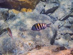 DCL March 2019 Tortola Underwater-73-2.jpg (Rhinodad) Tags: disneycruise disneyfantasy tuesday underwater 2019 dcl tortola britishvirginislands vg