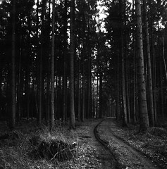 Pathway (Rosenthal Photography) Tags: ff120 asa400 analog epsonv800 landschaft mittelformat mediumformat 20190301 rodinal12521°c105min 6x6 ilfordrapidfixer anderlingen städte zeissikonnettar51816 rolleiretro400s dörfer siedlungen forest winter february trees landscape track trail path way pathway mood blackandwhite zeiss ikon nettar novar anastigmat 75mm f45 rollei retro retro400s rodinal 125 epson v800