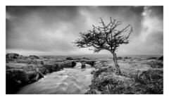 Clapper (Robgreen13) Tags: devon dartmoor treescape landscape riverteign clapper bridge longexposure rain mist bw monochrome