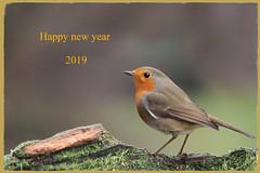 robin (erithacus rubecula) (alfred.reinartz) Tags: robin rotkehlchen singvogel erithacusrubecula vogel bird