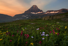 Summer Flowers at Glacier National Park (NickSouvall) Tags: summer spring season flowers field grass wildflowers indian paintbrush daisy flower colorful colors red orange sky cloudy sunrise light warm hazy alpenglow glow mountain peak alpine scenery landscape nature glacier national park montana