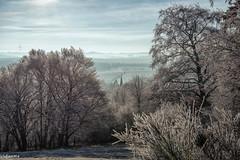 25122018-DSC_0138 (vidjanma) Tags: matin clocher village arbres givre ardenne