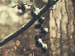 Im Winter Wald - 19. Januar 2019 - Schleswig-Holstein - Deutschland (torstenbehrens) Tags: im winter wald 19 januar 2019 schleswigholstein deutschland olympus ep5 m40150mm f4056 r