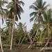 Ancestor poles and palms