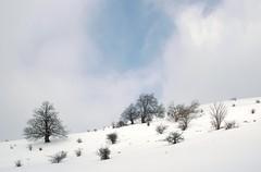 drh00111F (m-klueber.de) Tags: drh00111f hoherhön hochrhön winter landschaft schnee buche buchen fagus sylvatica rotbuche hutebuche hexenbuche himmeldunk himmeldunkberg 20050306 hexenbuchen rhön deutschland 2005 drh00111 mkbildkatalog