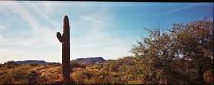 Ultronic Panoramic / Fuji 200 (K e v i n) Tags: ultronicpanoramic fuji200 film 35mm blackcanyontrail newriver arizona az sonorandesert desert outside landscape nature firstroll saguaro cactus