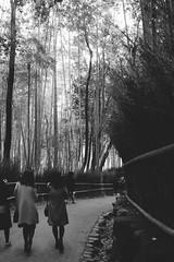 Arashiyama Bamboo Forest /// Kyoto, Japan /// January 2019 (robert.m.gambill) Tags: fujifilm xpro2 digital mirrorless rangefinder 7artisans 25mm f18 bw arashiyama bamboo forest kyoto japan street travel
