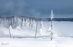 Chill to the bone (Selectivebits) Tags: winter snow nationalpark yellowstone bestcapturesaoi elitegalleryaoi admirationx17 exquisitex23 goormorningx20
