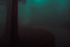 Untitled (elsableda) Tags: forest portugal mist foggy winter trees nature road twilight