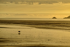 Oyster Catcher (David Hamments) Tags: bird oystercatcher nz sunset reflection waikanaebeach flickrunitedaward