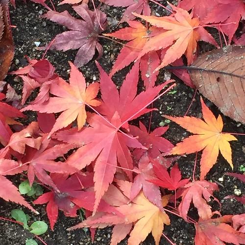 枯葉舞い散る散歩道で