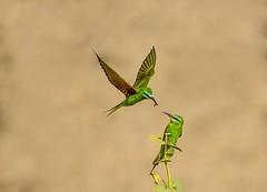 10 (TARIQ HAMEED SULEMANI) Tags: sulemani tariq tourism trekking tariqhameedsulemani winter wildlife wild birds nature nikon