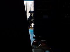 La Flaca (Kika 2). (Juan Antonio Xic Eseyosoyese) Tags: perrita la flaca ó kika 2 perra callejera casi señora maría pero de calle aguardando algo comer asomándose entre los refrigeradores tienda miscelánea galones agua contraluz o así paz barandal méxico dog dogpic amiga nikon escena relax can eseyosoyese minimalismo eléctrica