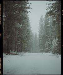 winter near lassen on medium format film (Garrett Meyers) Tags: pentax67 garrettmeyers film filmphotographer mountains trees forest california kodak kodakfilm portra400 snow fall cold blizzard storm white green 120 6x7