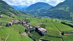 Weinberge bei Bozen (Sanseira) Tags: italien italy südtirol ritten bozen weinberge