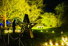 Kew Gardens Winter Light Festival (tramsteer) Tags: tramsteer nikond500 kew winter light festival trees flora naturalhistory nature people london england europe geotag